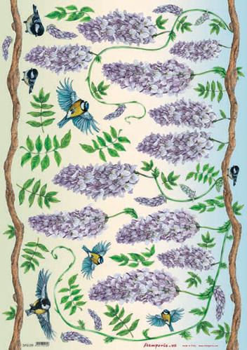 Carta e fantasia di giulia raimondo dfg139 glicine a for Glicine disegno