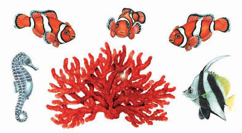 Disegni di coralli marini migliori pagine da colorare for Immagini coralli marini