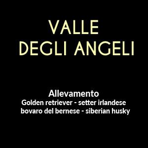 ALLEVAMENTO LA VALLE DEGLI ANGELI DI GIANO MICHELE