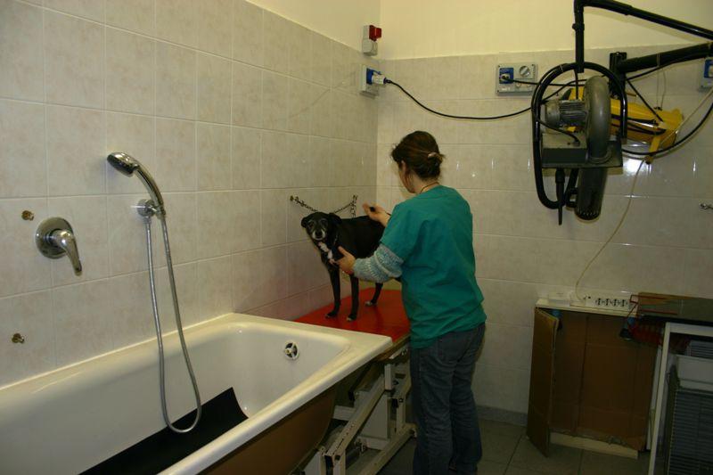 Vasca Da Toelettatura : Vasca toelettatura per cani annunci bologna