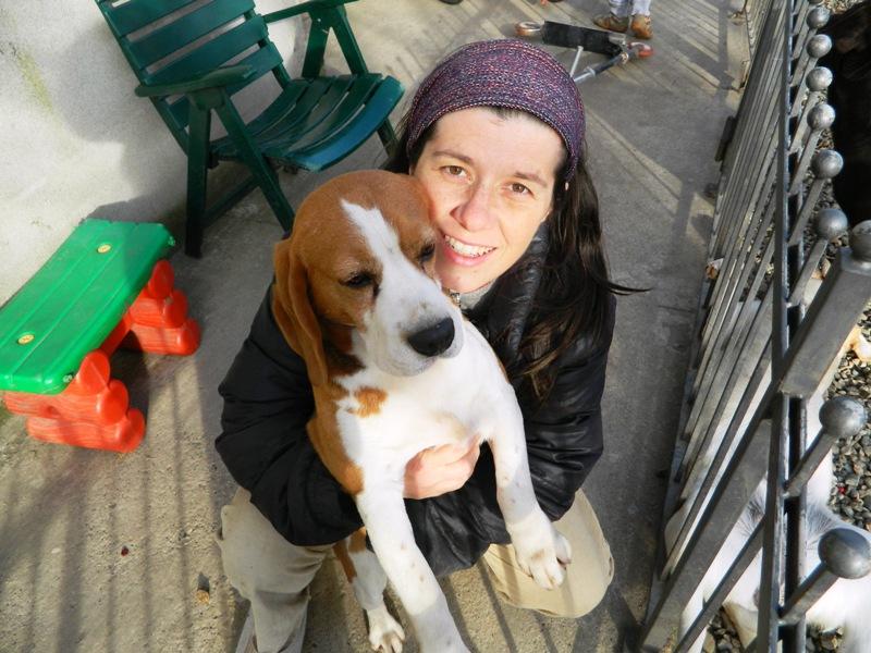 Ma che giornata del beagle.......sezione