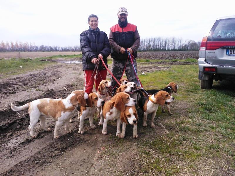 i pedigree dei nostri beagle