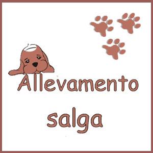 ALLEVAMENTO SALGA