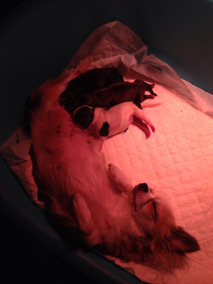 Mamma EVA allattava così!