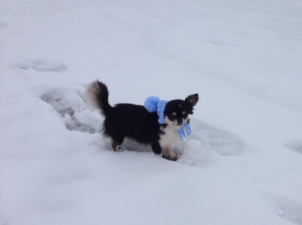 AL e la neve, quanto divertimento! (Febbraio 2015)