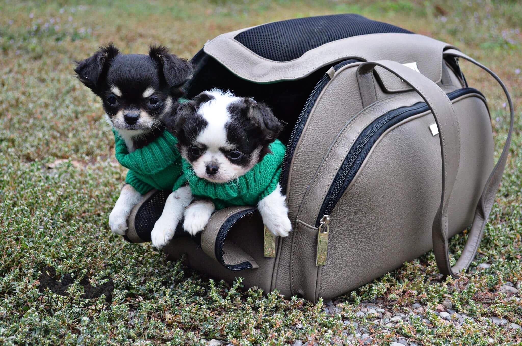 Pollon e Rebecca von Fedelia modelle per Doggyly