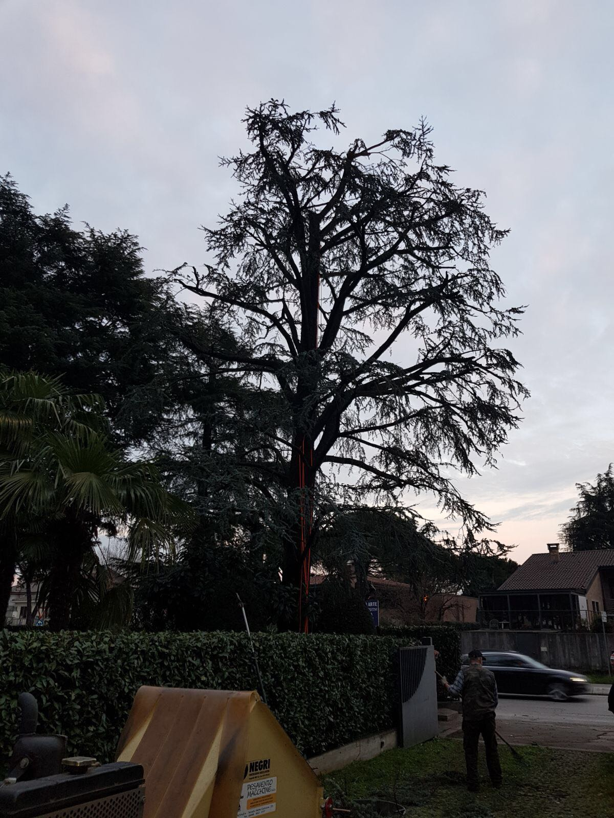 Potature in tree climbing Dopo
