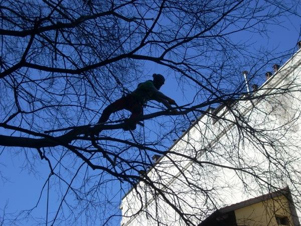 Tree Climbing a Savona