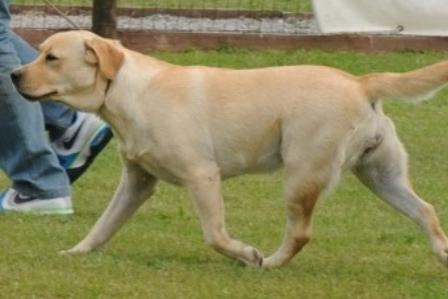 The Dog Father Deanna Dunn (Ketty)