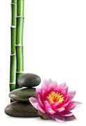 Fiori di loto e bamboo