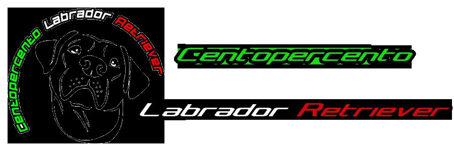 CENTOPERCENTO LABRADOR RETRIEVER