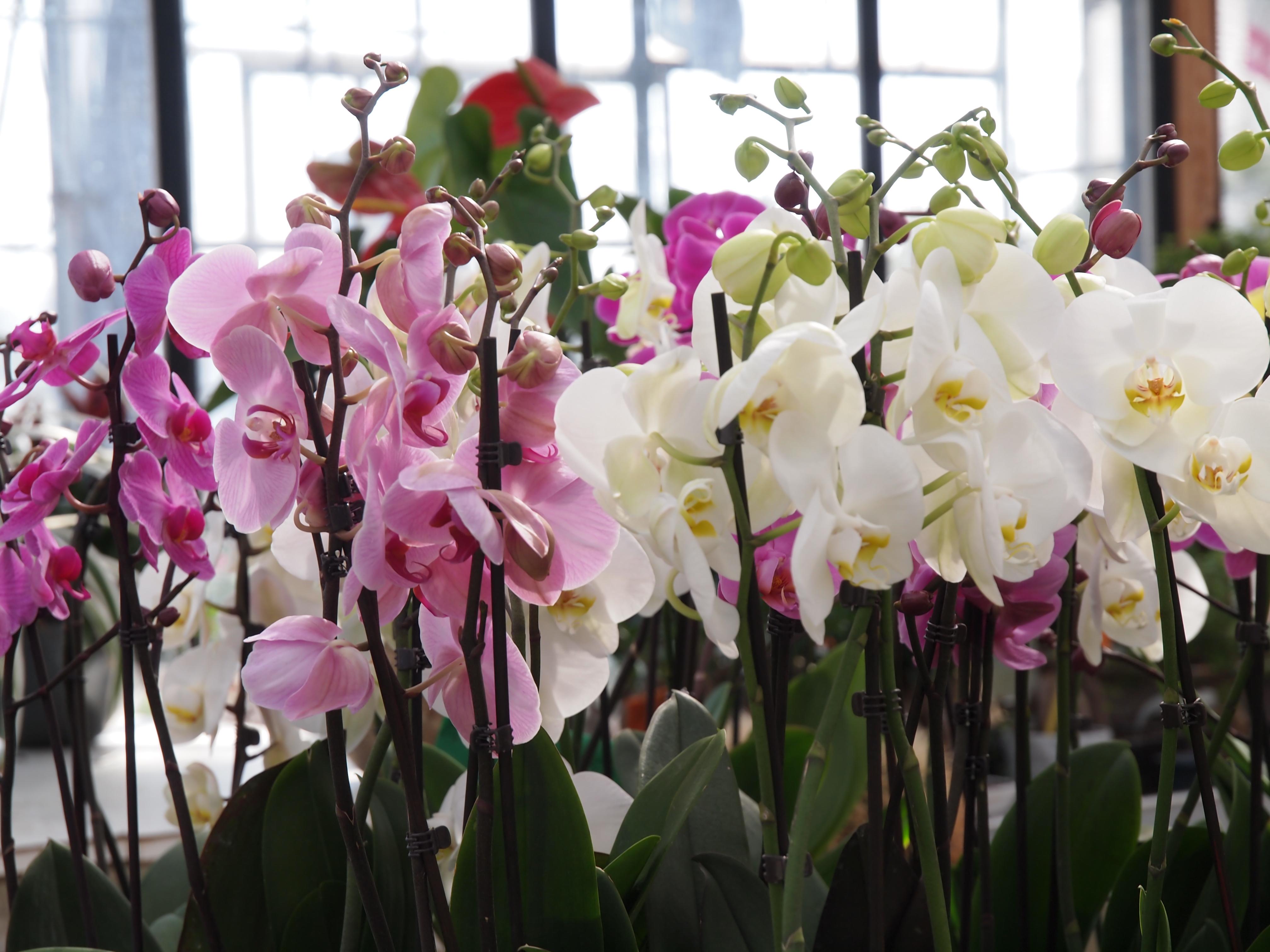 Piante fiorite e verdi da interno ed esterno