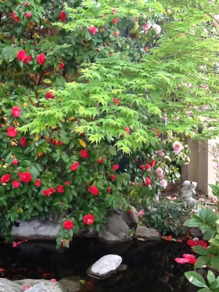 Laghetti ornamentali dalla pietra al fiore for Laghetti ornamentali