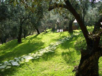 Dalla Pietra al Fiore:Manutenzione Giardini a Pieve Ligure