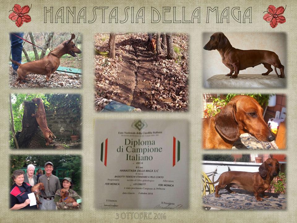 CH Hanastasia Della Maga