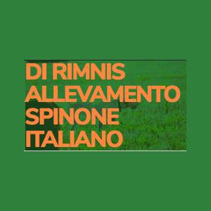 DI RIMNIS ALLEVAMENTO SPINONE ITALIANO