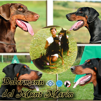 DOBERMANN DEL MONTE MARIN