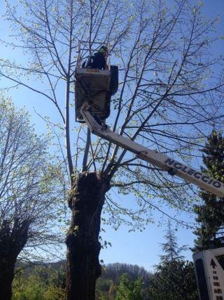 Tree Climbing e Abbattimento Alberi