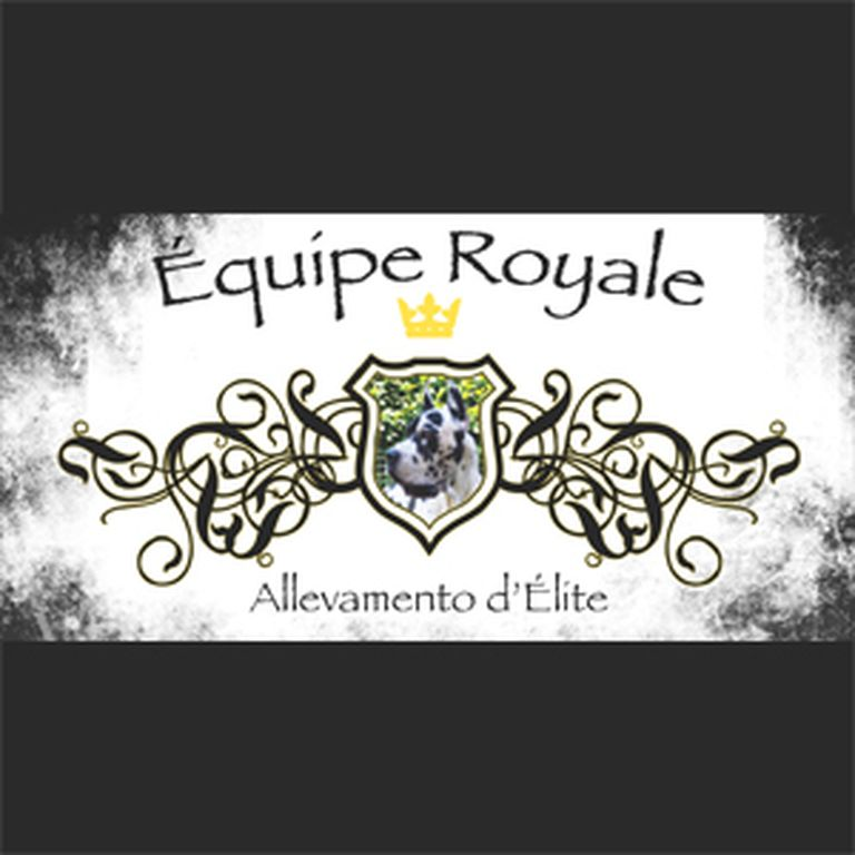 EQUIPE ROYALE