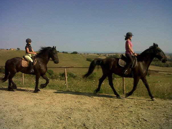 I Cavalli e i loro amici