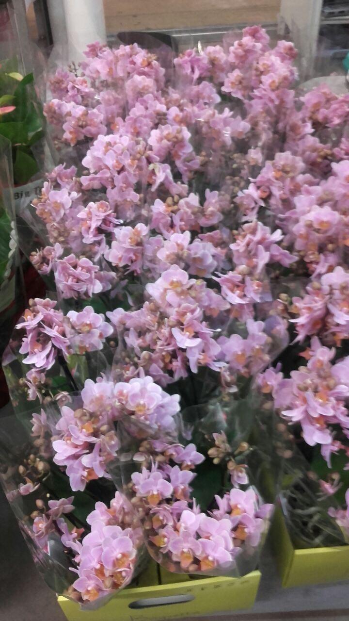 Vendita piante e fiori a busalla for Vendita piante e fiori