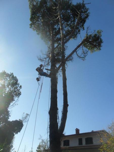 Consolidamenti alberi con arrampicata su corda a Lucca e dintorni. GIARDINIERE D'ORO DI PETRESCU DORU cell 348 1208037