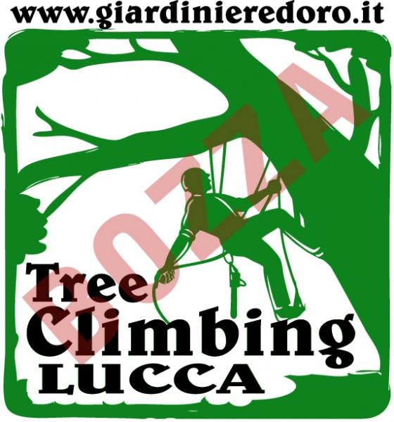 TREE CLIMBING LUCCA-GIARDINIERE d'ORO potatura alberi ad alto fusto.cell 348 1208037