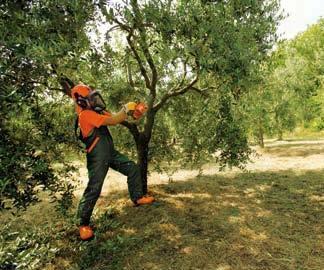 Trattamenti fitosanitari a Montecchio Precalcino. Contatta GIARDINIERE ZOLIN DANIELE cell 335 5475239