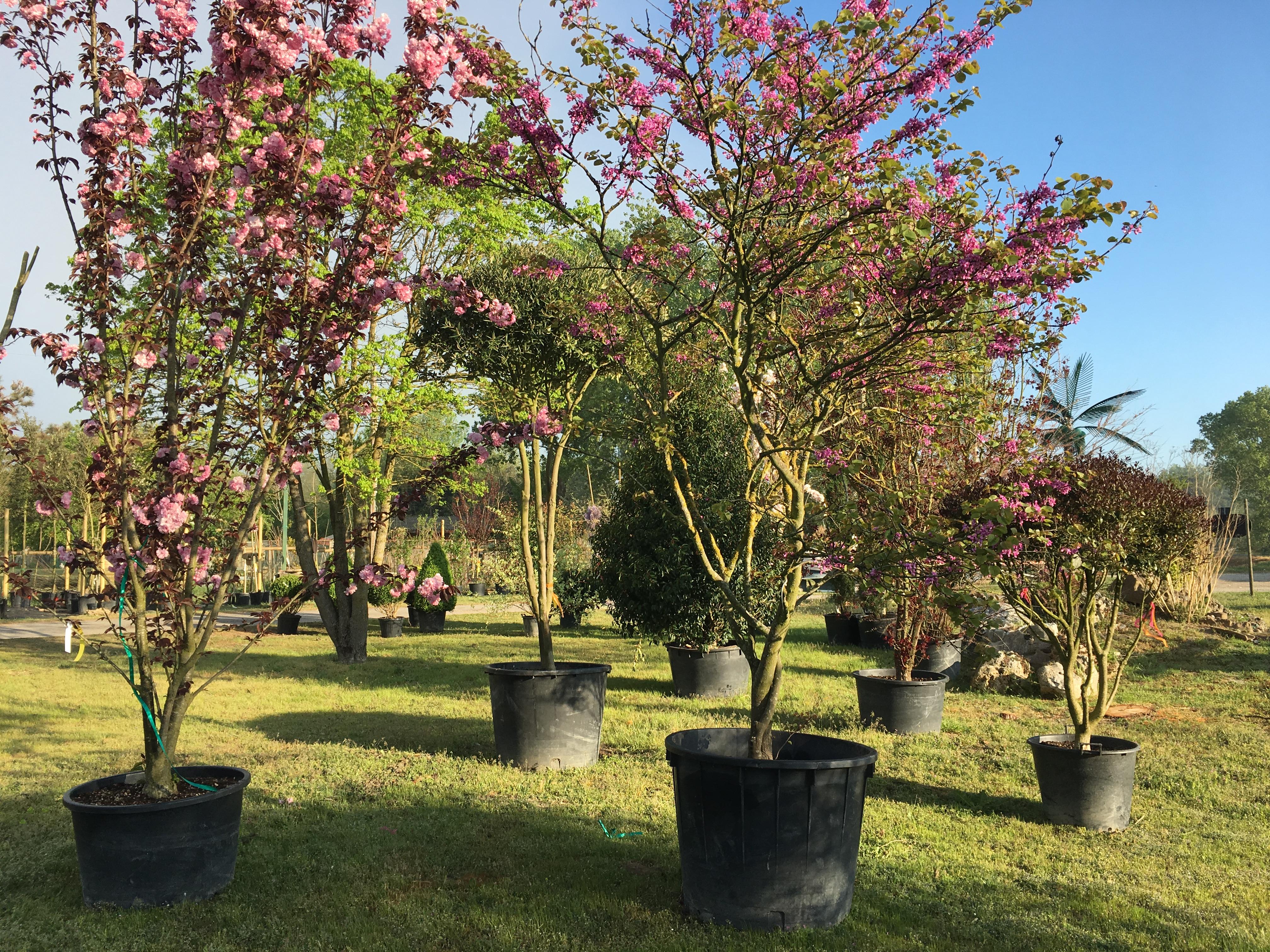 Vendita piante e complementi da giardino green style s s for Complementi da giardino