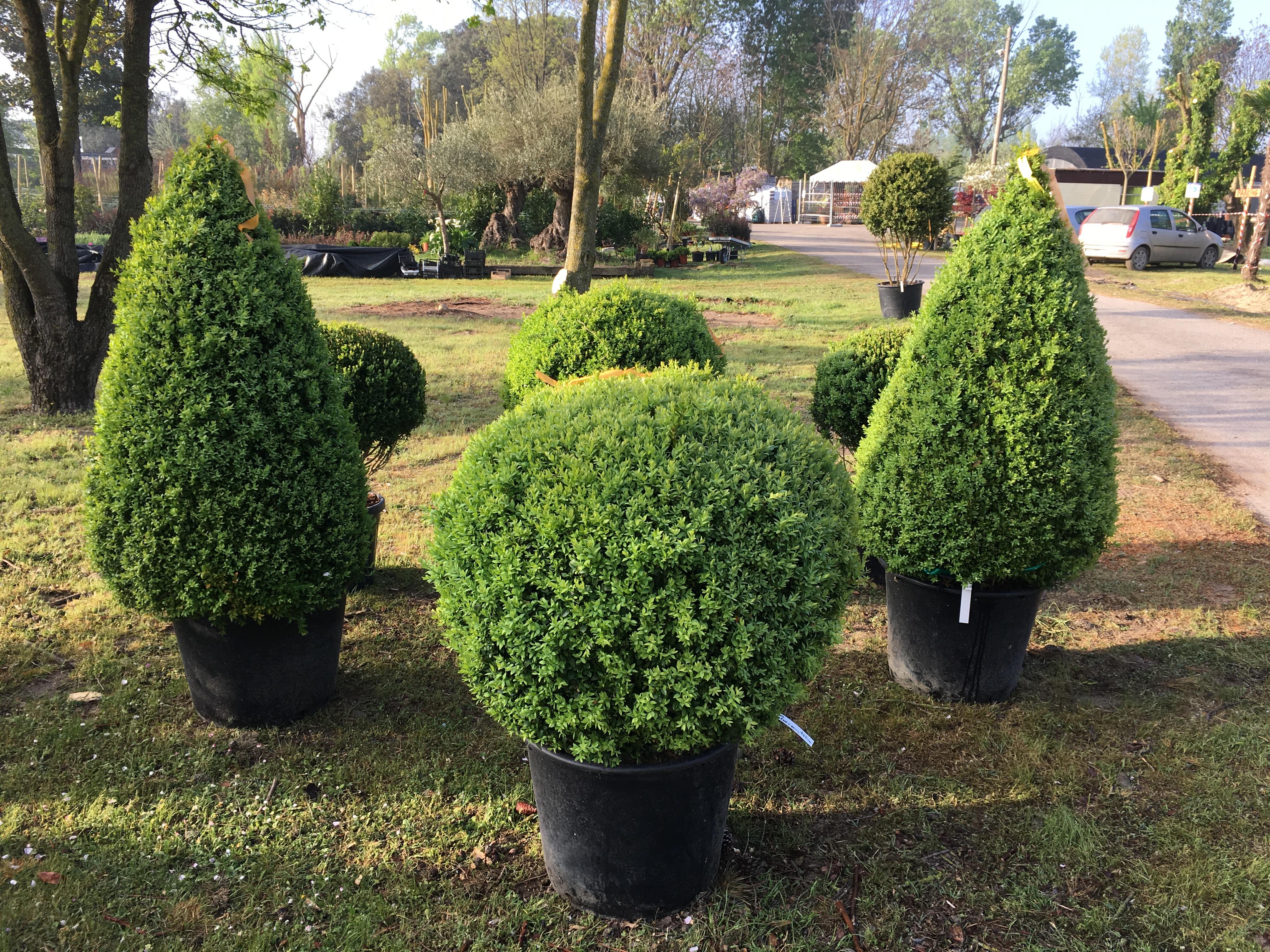 Vendita piante e complementi da giardino green style s s for Vendita piante giardino