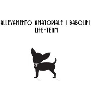 ALLEVAMENTO AMATORIALE I BABOLINI LIFE-TEAM