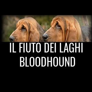 IL FIUTO DEI LAGHI BLOODHOUND