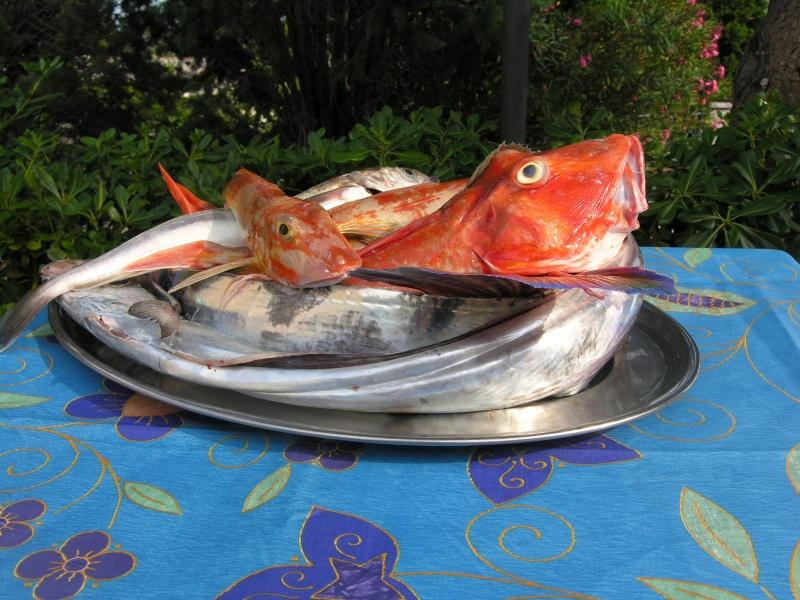 pesce_di_cogoleto_800