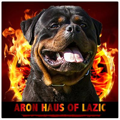ARON HAUS OF LAZIC - Rottweiler Kennel Cuori Impavidi