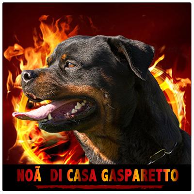 NOA DI CASA GASPARETTO - Rottweiler Kennel Cuori Impavidi