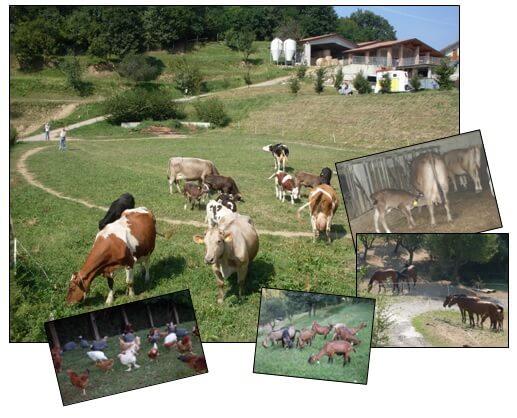 Azienda Agricola Le Colline Bergamo
