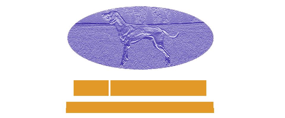 LINDENHOF CHERSI - ALLEVAMENTO WEIMARANER