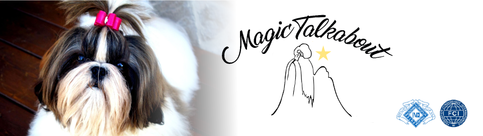 MAGIC TALKABOUT