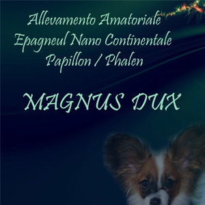 ALLEVAMENTO AMATORIALE PAPILLON - MAGNUS DUX