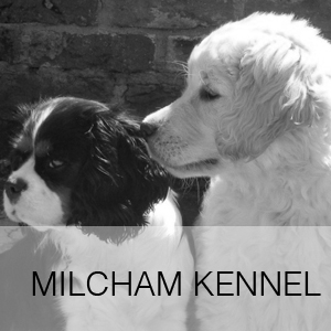 MILCHAM KENNEL
