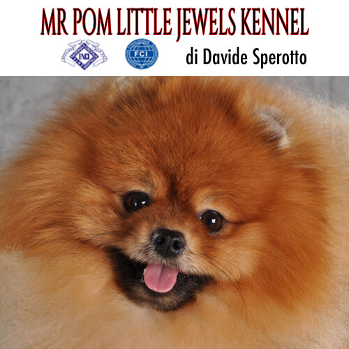 MR POM LITTLE JEWELS DI DAVIDE SPEROTTO