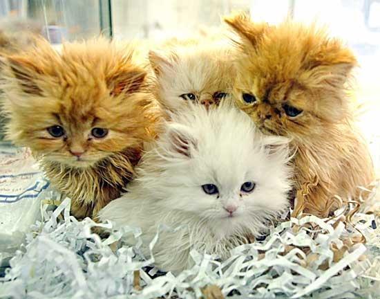 Pensione per gatti