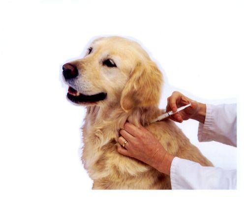 Vendita animali vaccinati