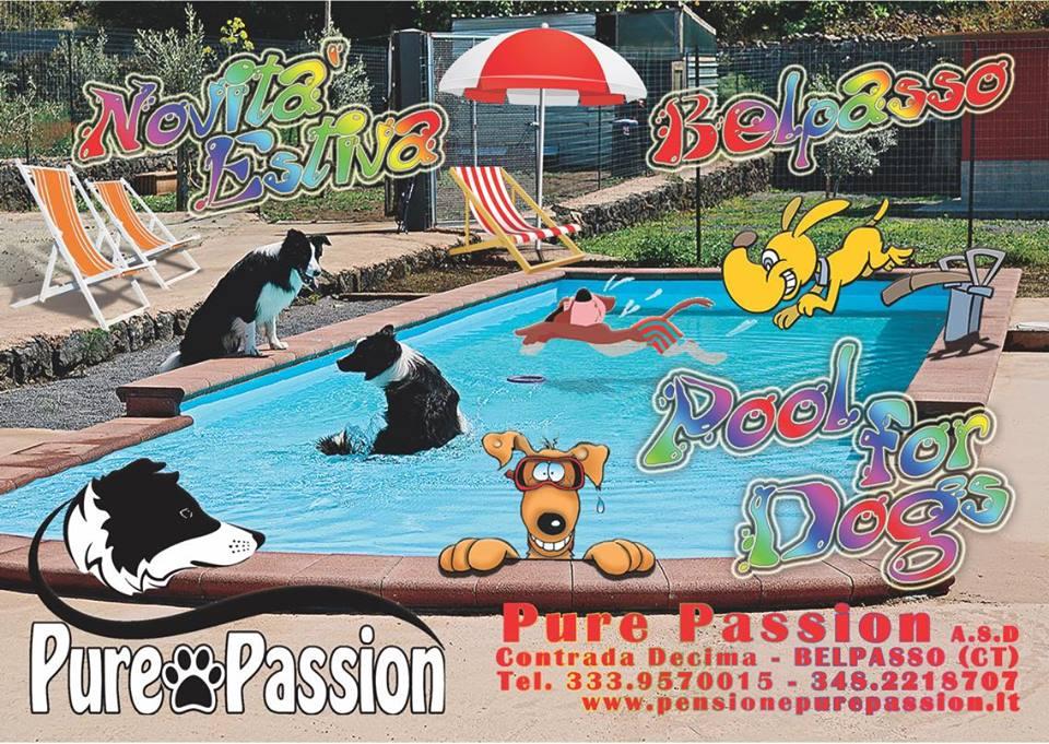 piscina per cani a catania