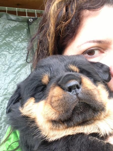 Cucciolo a 25 Giorni
