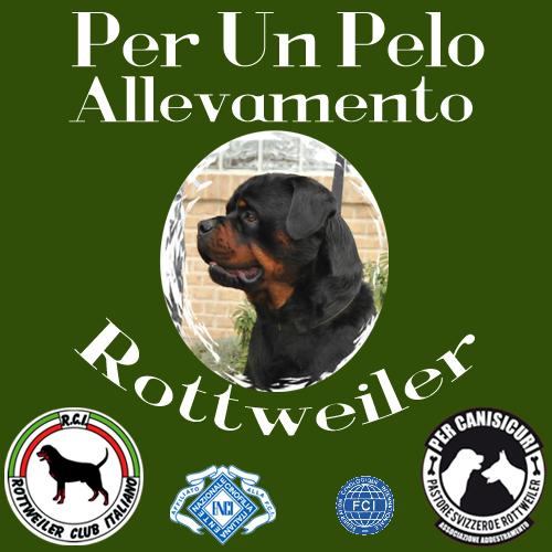 ALLEVAMENTO ROTTWEILER - PER UN PELO