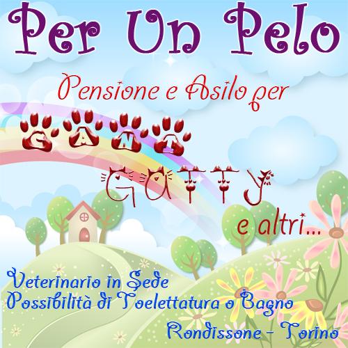 PENSIONE CANI TORINO - PER UN PELO - Pensioni Cani Torino Piemonte - Gattile Torino Piemonte