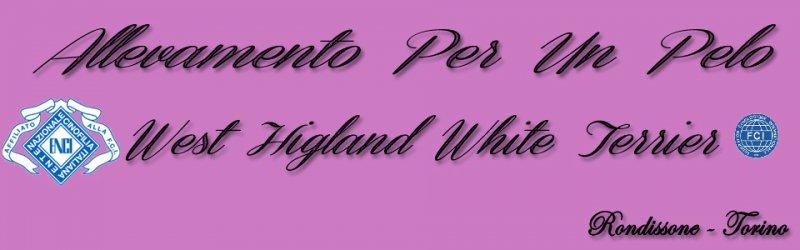 Allevamento West Higland White Terrier