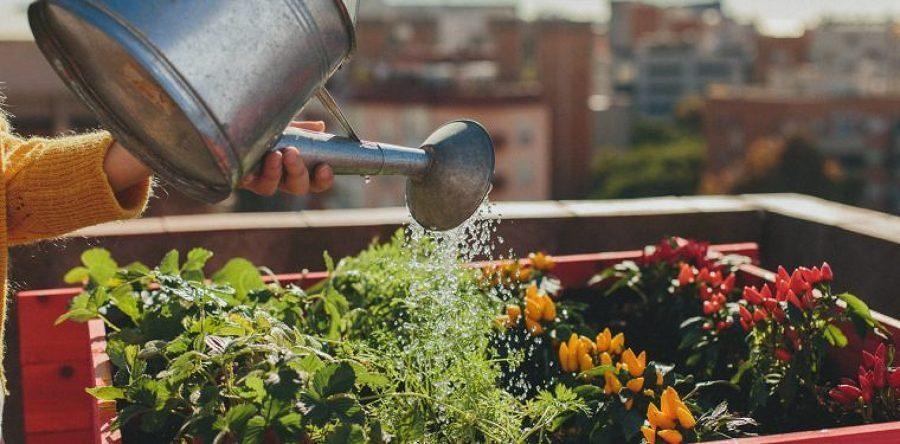 Realizzazione e cura orti urbani