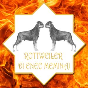 Rottweiler lombardia Meminaj